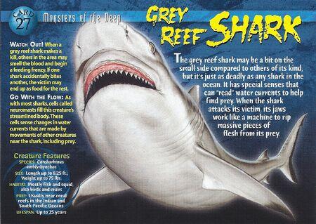 Grey Reef Shark front