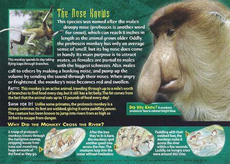 Proboscis Monkey back
