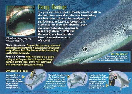 Grey Reef Shark back
