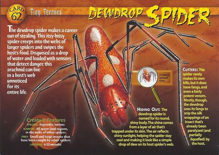 Dewdrop Spider front