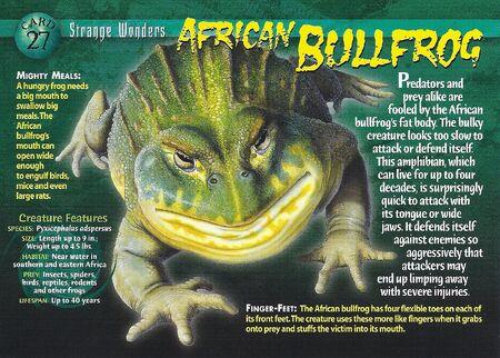 African Bullfrog front