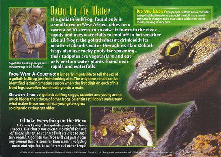 Goliath Bullfrog back