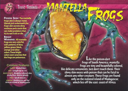 Mantella Frogs front