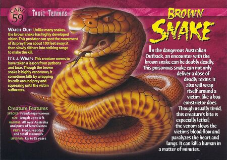 Brown Snake front