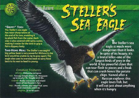 Stellar's Sea Eagle front