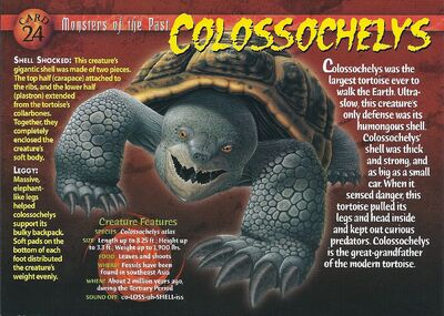 Colossochelys front
