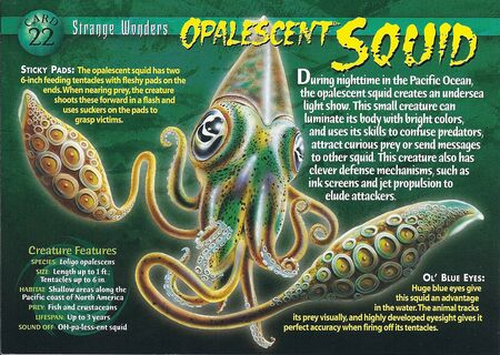 Opalescent Squid front