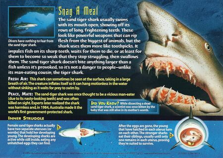 Sand Tiger Shark back