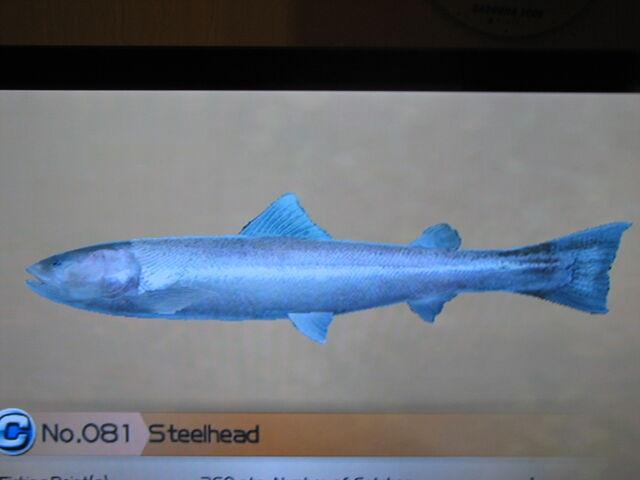 File:Steelhead.jpg