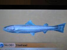 1280px-Steelhead