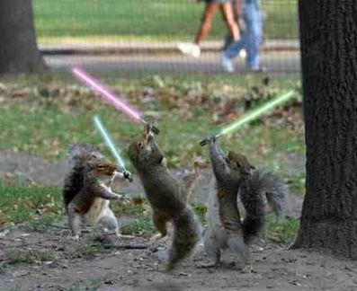 File:136-fighting-squirrels.jpg
