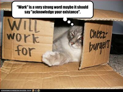 Funny-pictures-cat-may-work-for-cheeseburgers