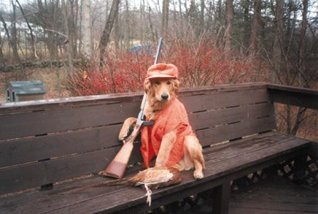 File:Dog hunter.jpg