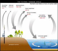 Understanding carboncycle