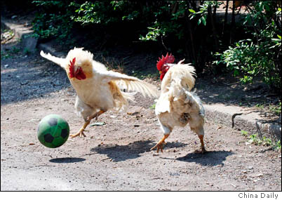 RoosterSoccer