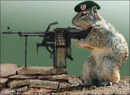 Squirrelarmy