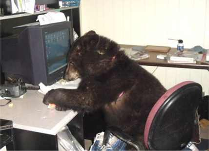 File:Bear at computer.jpg