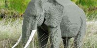 Elephant/Featured