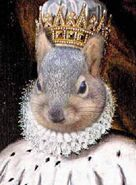Squirrel-King worth1000