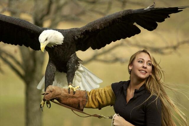 File:EagleHandler.jpg