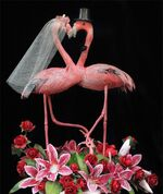 Gay Flamingo Wedding