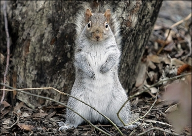 File:Squirrel.jpg