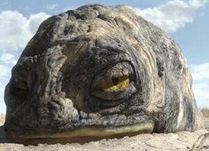 Rock-Eye1