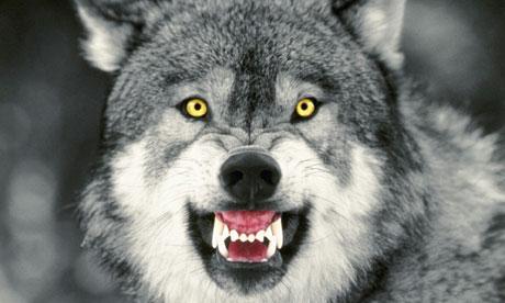 File:Courage wolf.jpg
