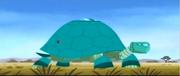 New tortuga