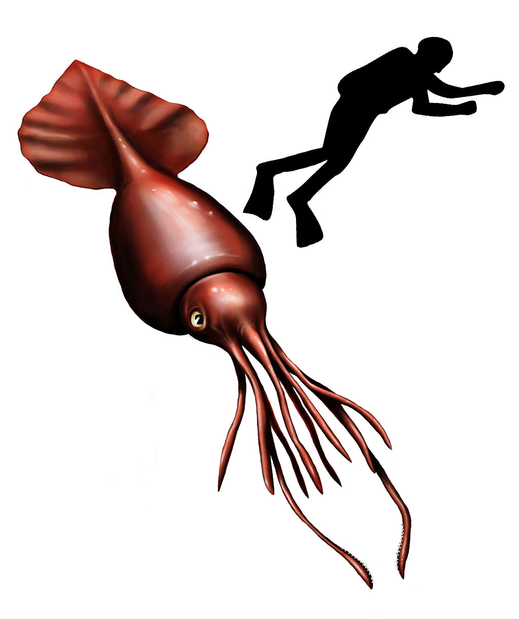 colossal squid wild kratts wiki fandom powered by wikia
