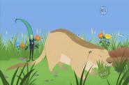 Grass Martin and Prairie Dog