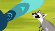 Raccoon wants Feather