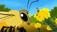 Flight.pollinators.06