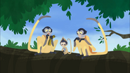 Grabsy and 2 other Spider Monkeys
