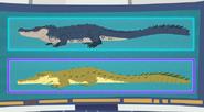 Crocogater.wildkratts.01
