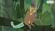 Golden Bamboo Lemur Eating
