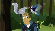 Squirrel Vs Blue Jay on Martin's Head