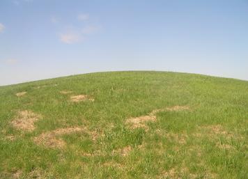 Habitat, hilltop