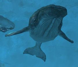 File:Humpbackwhalewikipic.png