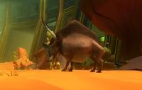 Sandhoof Bull
