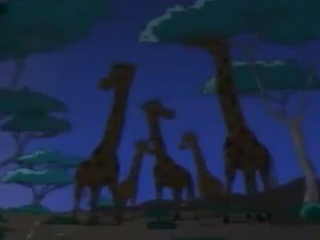 File:Night Giraffes.JPG