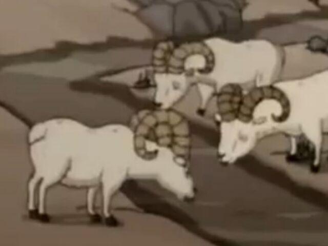 File:Dall Sheep.JPG