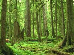 File:Forestwings.jpg