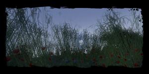 Places Fields