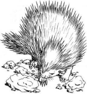 File:Echinops novels.png