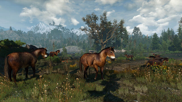 File:Skellige wild horses.jpg