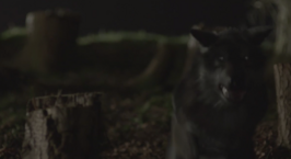WB Wolf 66