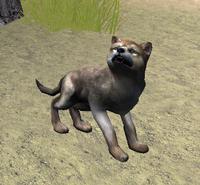 Pup brown