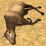 Elkcarcass 1