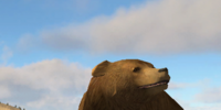 Grizzly bear (2.5)
